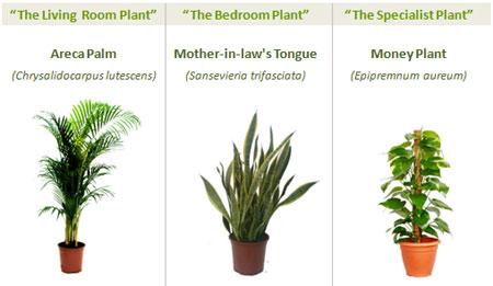 Las tres mejores plantas para limpiar el aire de casa - Plantas de interior purificadoras del aire del hogar ...